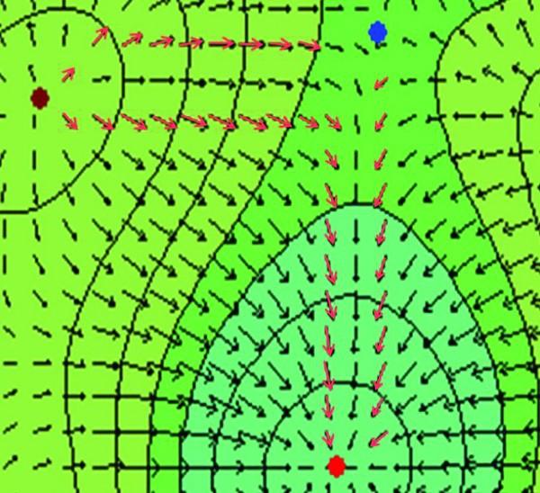 Рис. 1. Фрагмент грида с изображением направления градиентов. Цвет особых точек: красный — максимум, коричневый — минимум, синий — седло